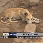 Subgerente Municipal de Salud se une al rechazo del maltrato animal