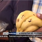 Festividad incentiva producción de plátano del molino