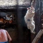 Esta fotografía salvó a este gato de manos de los carniceros chinos