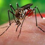 """OMS recomienda seis meses de abstinencia o """"sexo seguro"""" ante el Zika"""