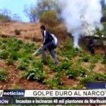 Pataz: Incautan e incineran 40 mil plantones de marihuana en el distrito de Huancaspata