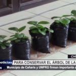 Chiclayo: Municipio de Cañaris firma convenio para conservar el árbol de la quina