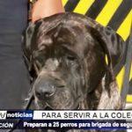MPT: Preparan a 25 perros para integrar brigada de Seguridad Ciudadana