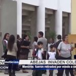 Piura: Abejas invaden colegio