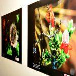 El SERNANP, la Municipalidad de Virú y la Escuela de Ciencias de la Comunicación de la UCV presentan muestra fotográfica colectiva