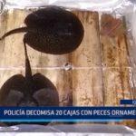 Iquitos: Policía decomisa 20 cajas con peces ornamentales