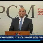 La Libertad: Producción forestal es una gran oportunidad para la región