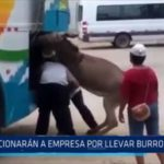 La Libertad: Sancionarán a empresa por llevar burro en bodega