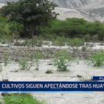 Piura: Desborde de río y huaycos generan pérdidas millonarias en cultivos