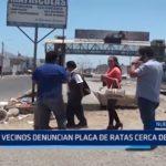 Nuevo Chimbote: Denuncian existencia de plaga de ratas frente a colegio