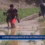Trujillo: Lluvias arrasan más de mil hectáreas de cultivo