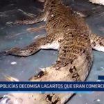 Iquitos: Policía decomisa lagartos que eran comercializados