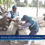 La Libertad: SENASA descarta enfermedades en animales después de los huaicos