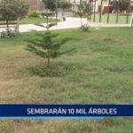 Trujillo: Sembrarán 10,000 árboles