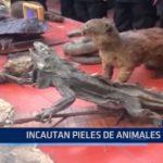 Iquitos: Incautan pieles de animales
