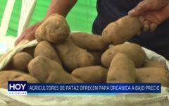 PROIND: Agricultores de Pataz ofrecen papa orgánica a bajo precio