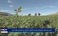La Libertad: Sector Agricultura aportará menos PBI en 2017