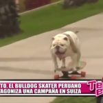 Otto, el bulldog skater peruano, protagoniza una campaña en Suiza