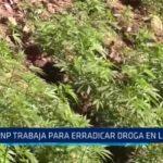 La Libertad: PNP trabaja para erradicar droga en la sierra