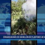 Huamachuco: Erradican más de un millón de plantones de marihuana