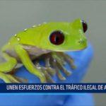 Ecuador: Unen esfuerzos contra tráfico ilegal de anfibios