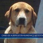 Canes de albergue de Huanchaco necesitan ayuda