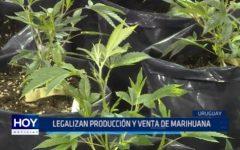 Uruguay: Legalizan producción y venta de marihuana