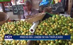 Trujillo: Precio del limón se ha triplicado