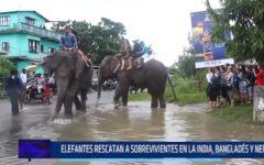 Elefantes rescatan a sobrevivientes en la India, Bangladés y Nepal