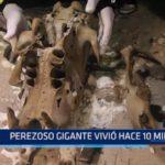 México: Perezoso gigante vivió hace 10 mil años