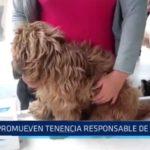 Promueven tenencia responsable de mascotas