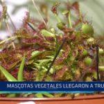 Mascotas vegetales llegaron a Trujillo