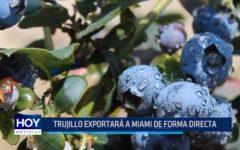 Trujillo exportará a Miami de forma directa