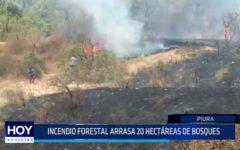 Piura: Incendio forestal arrasa 20 hectáreas de bosques