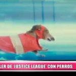 """Internacional: Crean tráiler de la """"Justice League"""" versión perruno"""
