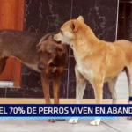 El Porvenir: El 70% de perros viven en abandono