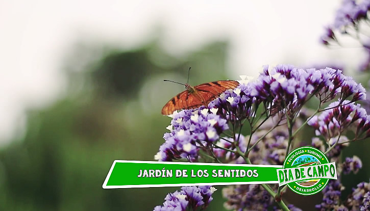 Conoce el jard n de los sentidos - El jardin de los sentidos ...