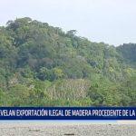 Revelan exportación ilegal de madera procedente de la amazonía