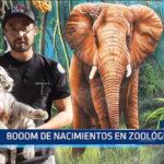 México: Nacen en zoológico un hipopótamo, dos tigres y una llama