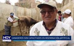 Trujillo: Ganadores son capacitados en inseminación artificial