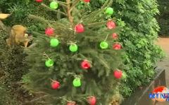 Londres: Monos y ardillas reciben regalo por navidad