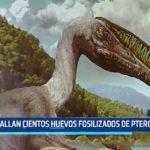 China: Hallan cientos de huevos fosilizados de pterosaurio