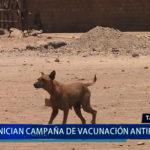 Piura: Inician campaña de vacunación antirrábica