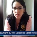 Trujillo: Decomisan zorros silvestres en restaurante de Virú