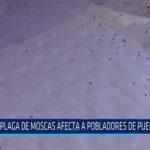 Chiclayo: Plaga de moscas afecta a pobladores de Puerto Eten