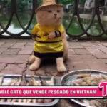 """Internacional: Conoce al """"Gatito vendedor"""" de pescado"""