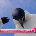 Internacional: Pingüinos invaden las Redes Sociales