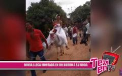 Novia llega montada en un burro a su boda
