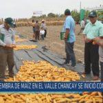 Chiclayo : Siembra de maíz en el valle Chancay se inició con retraso