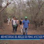 Chiclayo: 400 hectáreas del Bosque de Pómac afectado por plagas